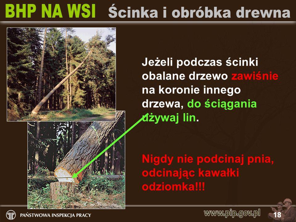 Jeżeli podczas ścinki obalane drzewo zawiśnie na koronie innego drzewa, do ściągania używaj lin.
