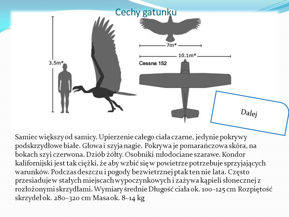 Cechy gatunku