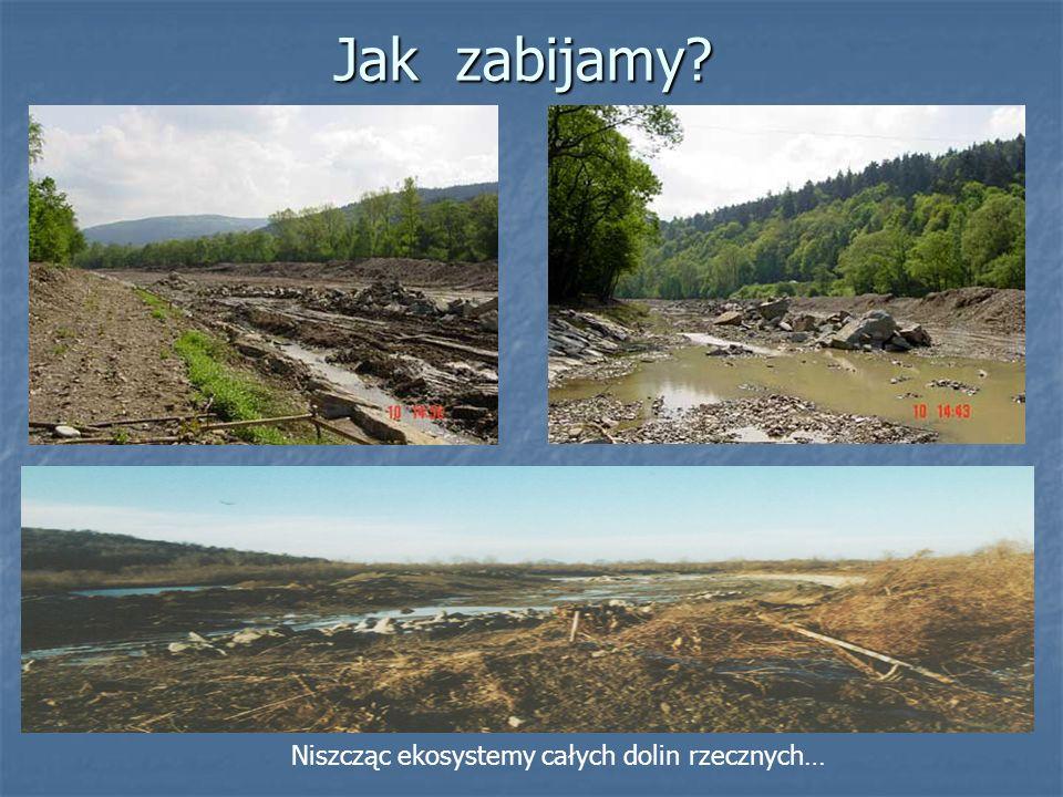 Jak zabijamy Niszcząc ekosystemy całych dolin rzecznych…