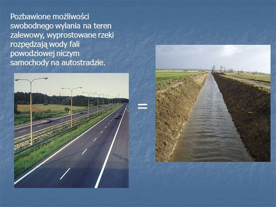 Pozbawione możliwości swobodnego wylania na teren zalewowy, wyprostowane rzeki rozpędzają wody fali powodziowej niczym samochody na autostradzie.