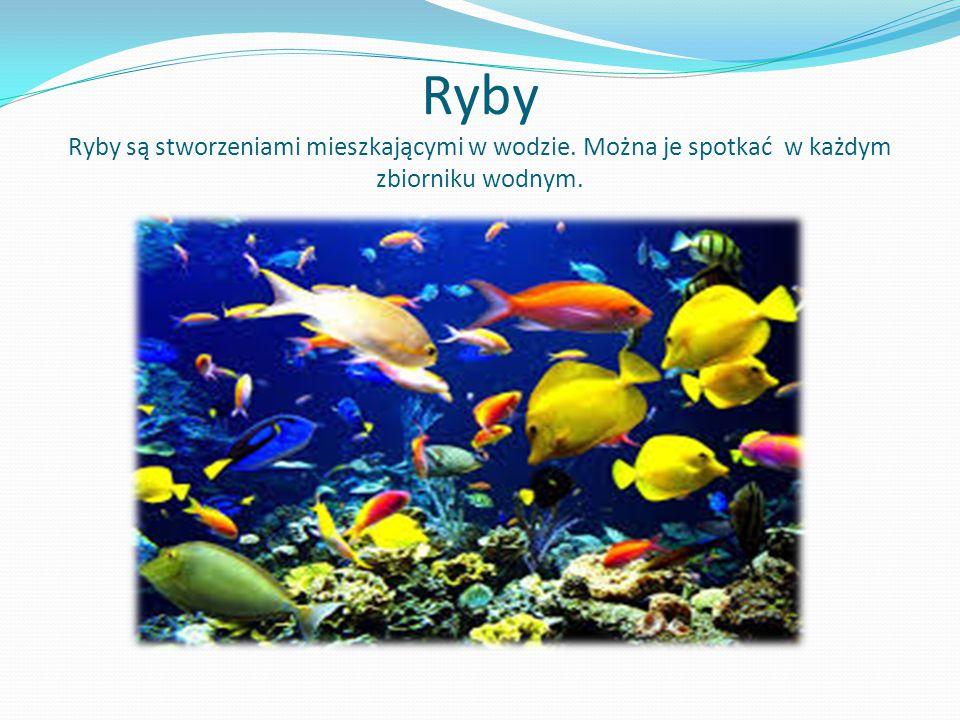 Ryby Ryby są stworzeniami mieszkającymi w wodzie