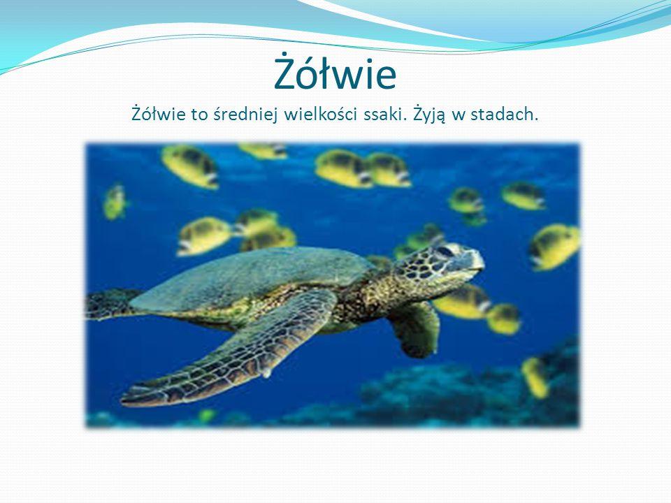 Żółwie Żółwie to średniej wielkości ssaki. Żyją w stadach.