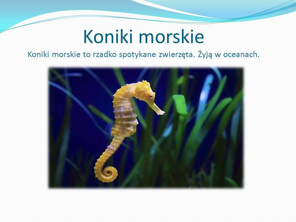 Koniki morskie Koniki morskie to rzadko spotykane zwierzęta