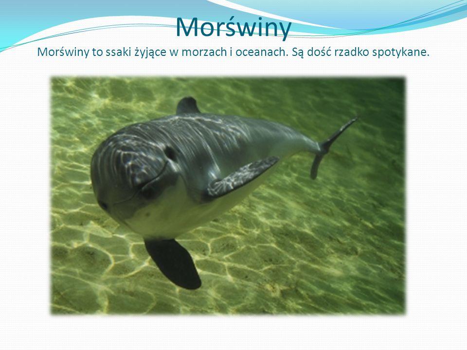 Morświny Morświny to ssaki żyjące w morzach i oceanach