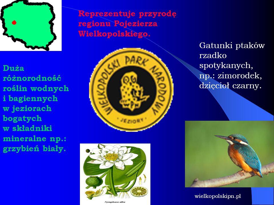 Reprezentuje przyrodę regionu Pojezierza Wielkopolskiego.