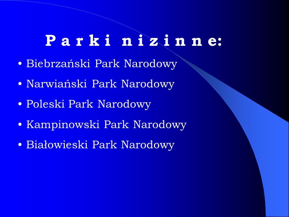 P a r k i n i z i n n e: Biebrzański Park Narodowy