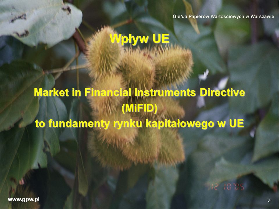 Wpływ UE Market in Financial Instruments Directive (MiFID)