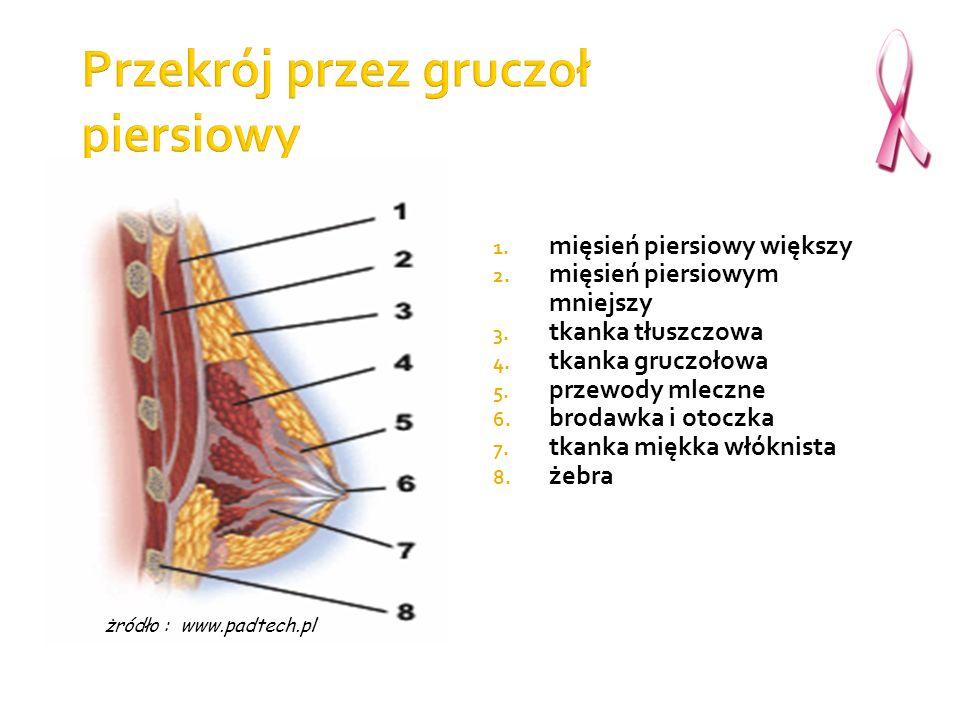 Przekrój przez gruczoł piersiowy