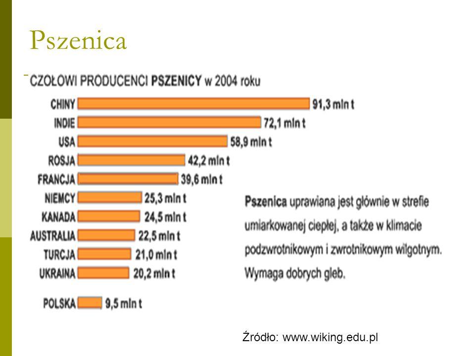 Pszenica Źródło: www.wiking.edu.pl