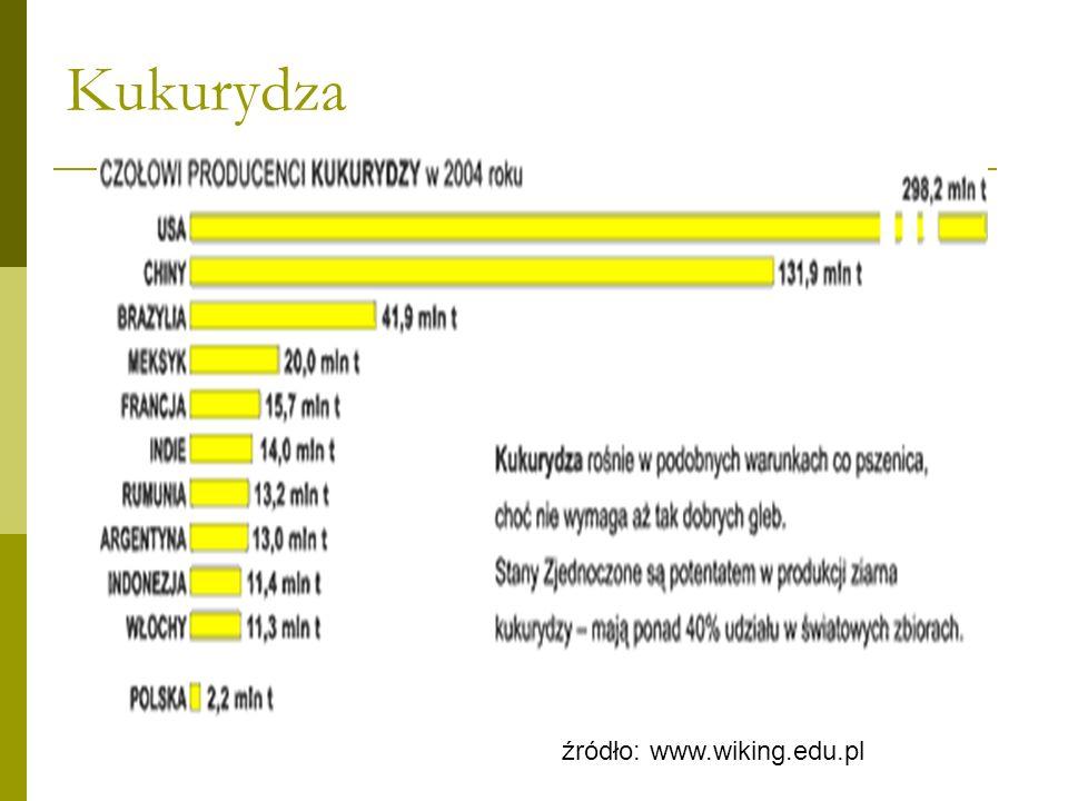 Kukurydza źródło: www.wiking.edu.pl