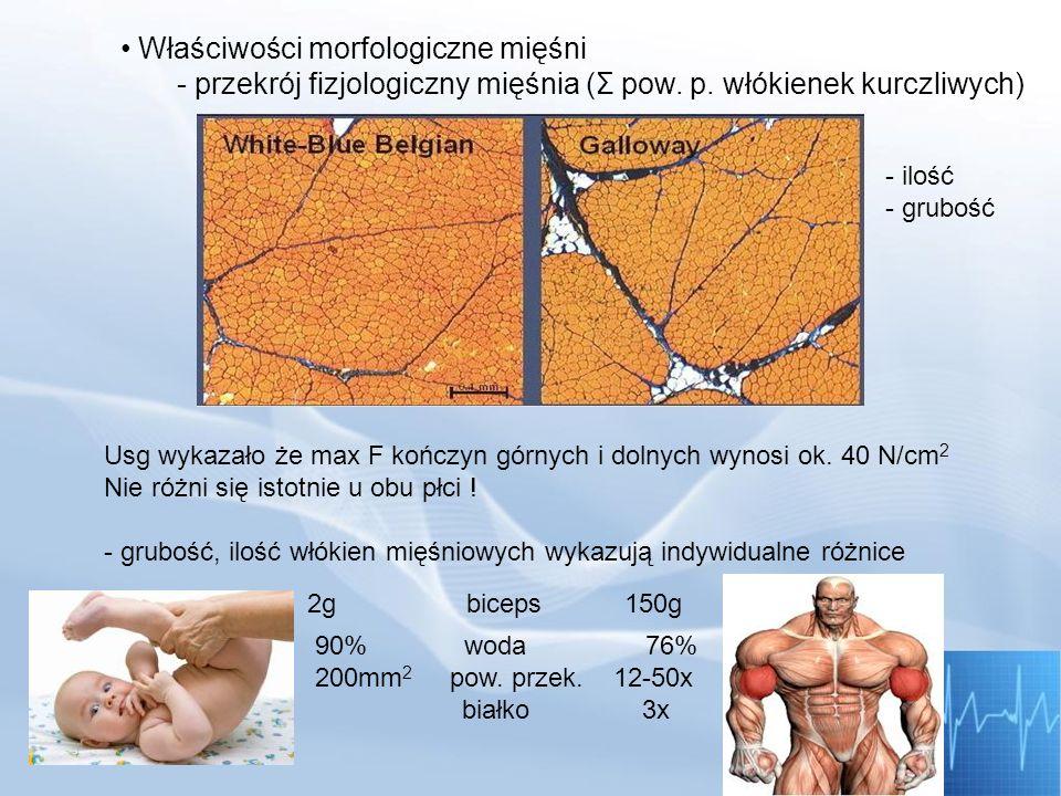 Właściwości morfologiczne mięśni - przekrój fizjologiczny mięśnia (Σ pow. p. włókienek kurczliwych)