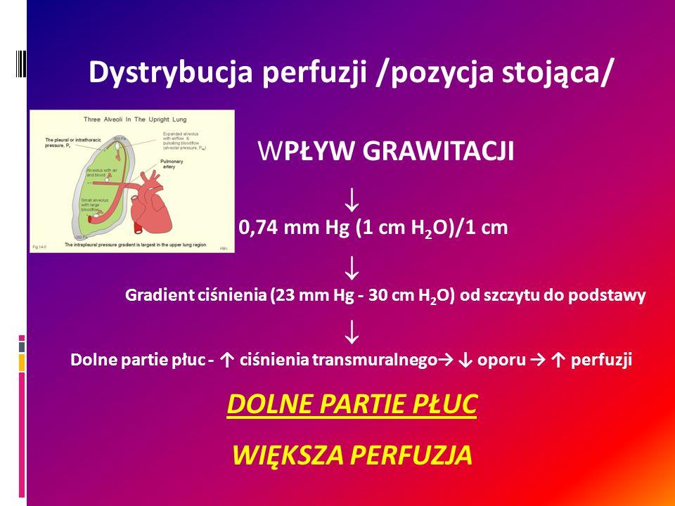Dystrybucja perfuzji /pozycja stojąca/