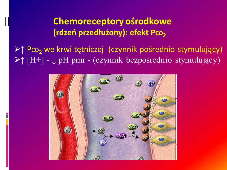 Chemoreceptory ośrodkowe