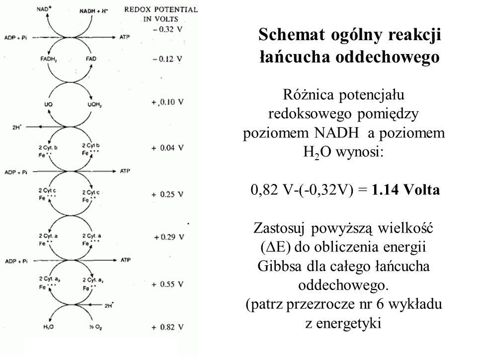 Schemat ogólny reakcji łańcucha oddechowego