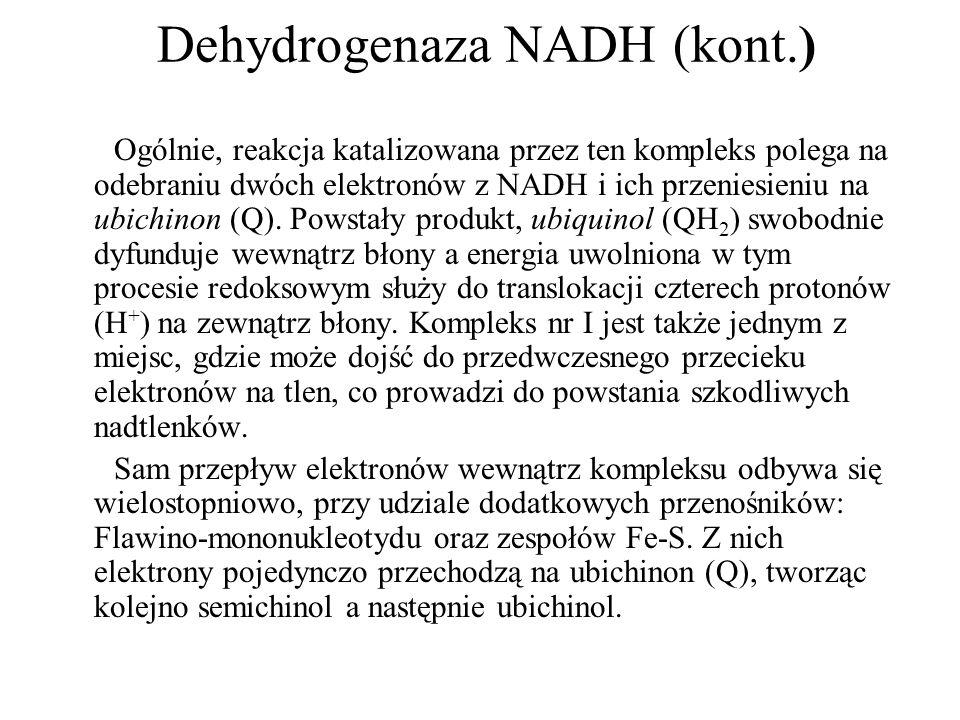 Dehydrogenaza NADH (kont.)