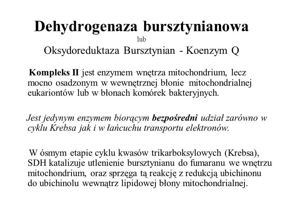 Dehydrogenaza bursztynianowa lub Oksydoreduktaza Bursztynian - Koenzym Q