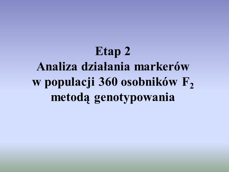 Etap 2 Analiza działania markerów w populacji 360 osobników F2 metodą genotypowania