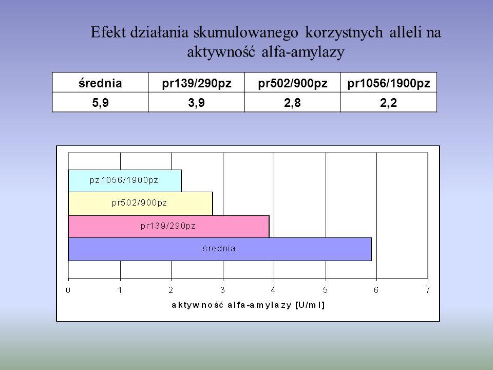 Efekt działania skumulowanego korzystnych alleli na aktywność alfa-amylazy