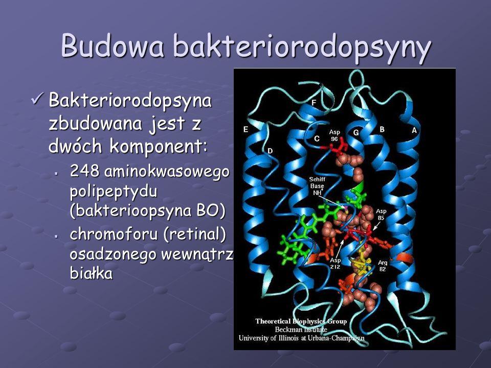 Budowa bakteriorodopsyny