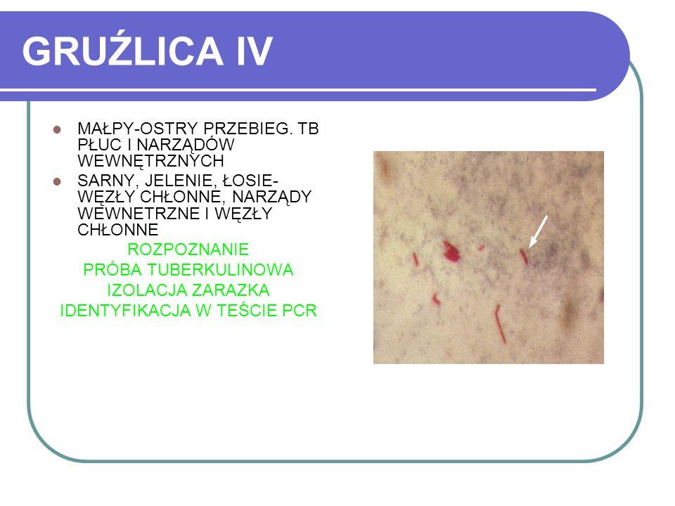 IDENTYFIKACJA W TEŚCIE PCR