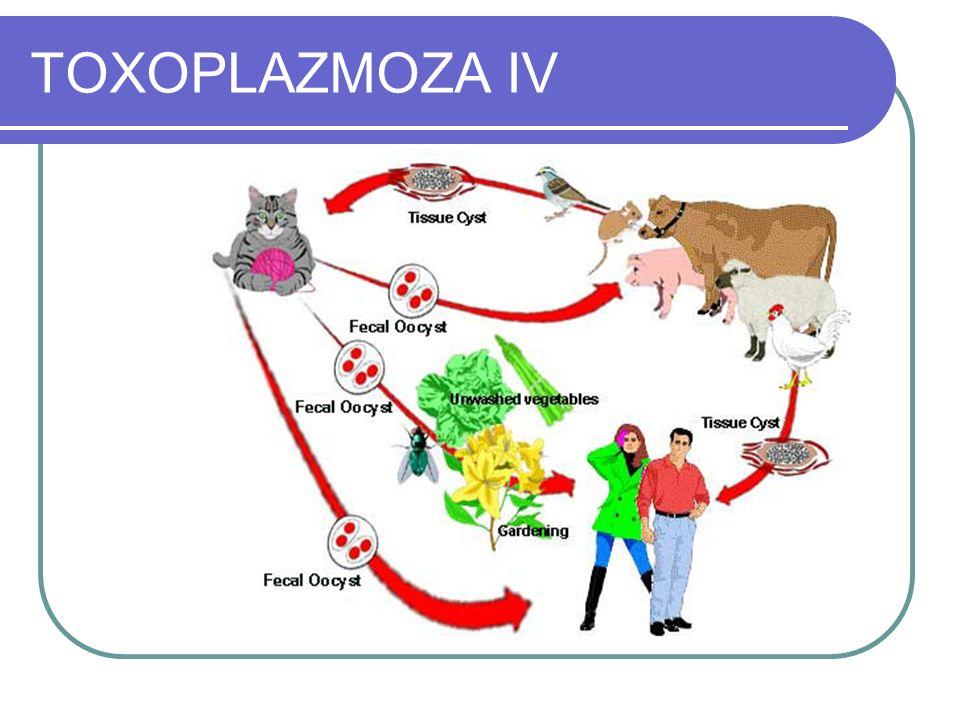 TOXOPLAZMOZA IV