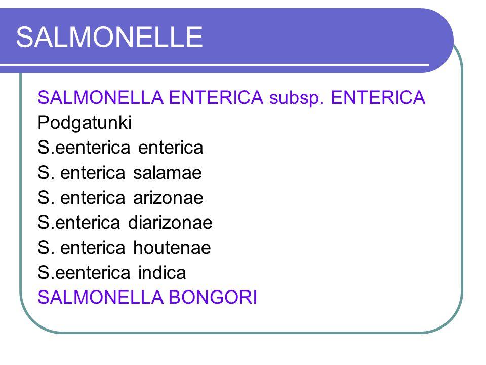 SALMONELLE SALMONELLA ENTERICA subsp. ENTERICA Podgatunki