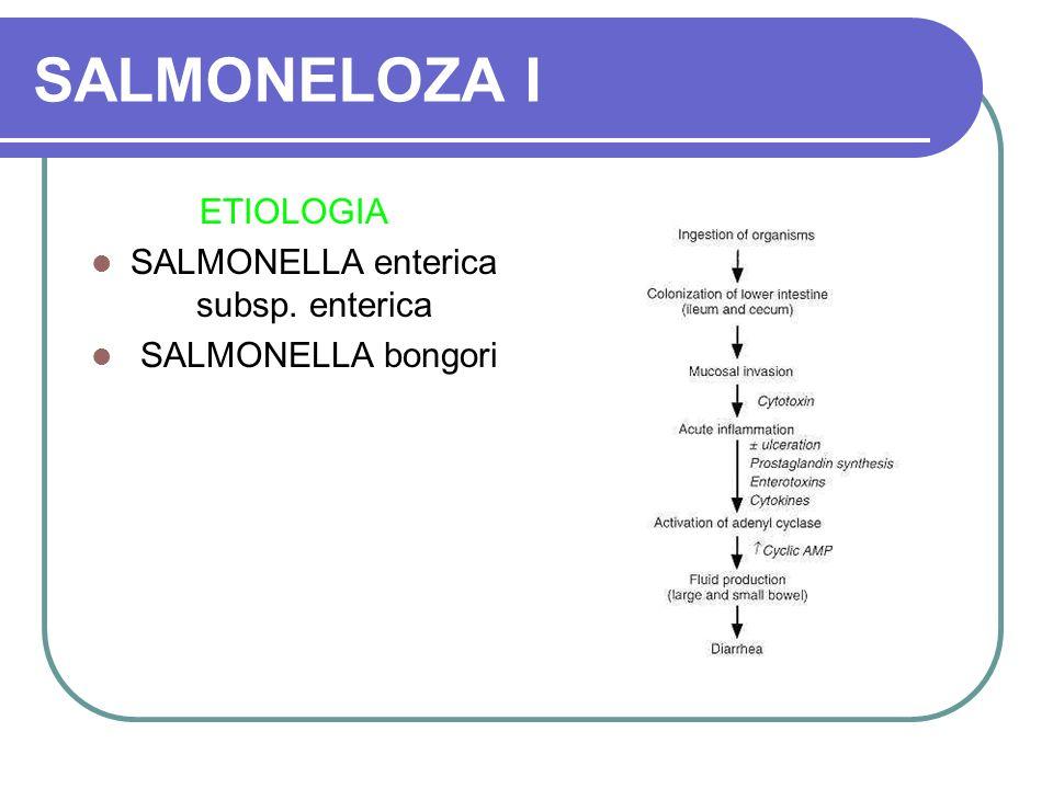 SALMONELLA enterica subsp. enterica