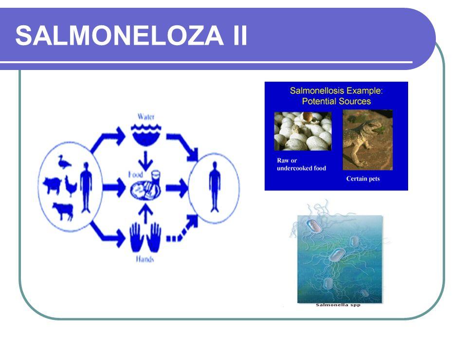 SALMONELOZA II