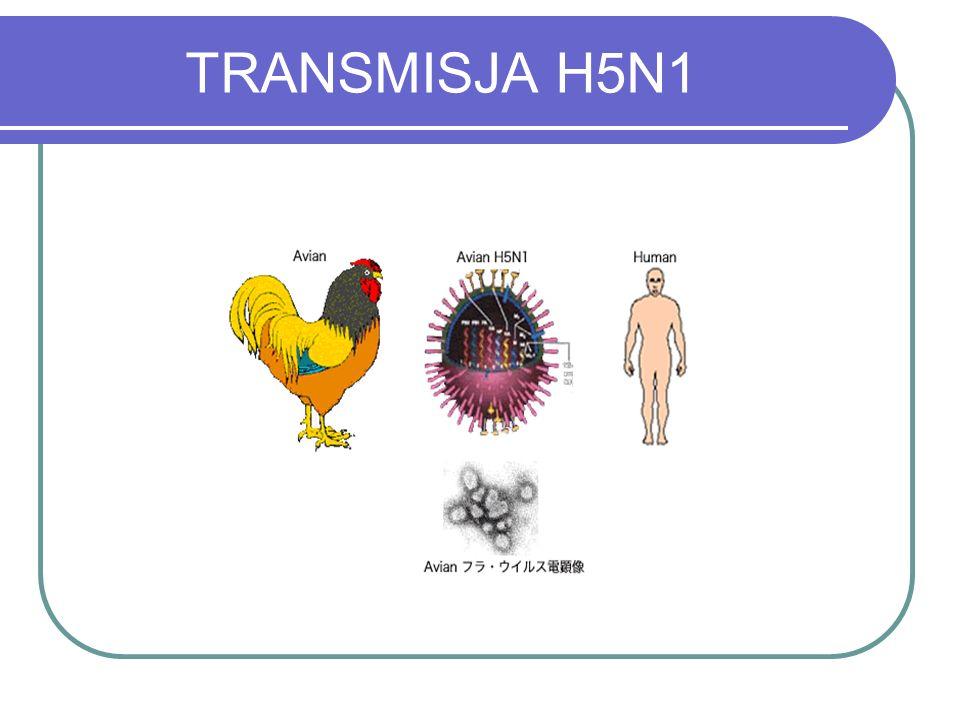 TRANSMISJA H5N1