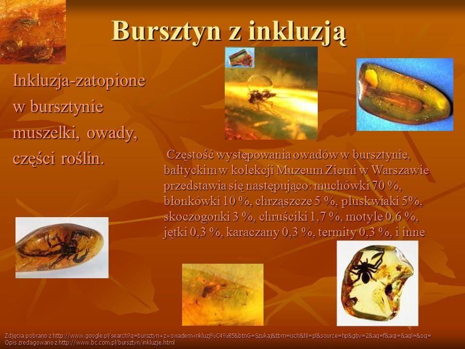 Bursztyn z inkluzją Inkluzja-zatopione w bursztynie muszelki, owady,