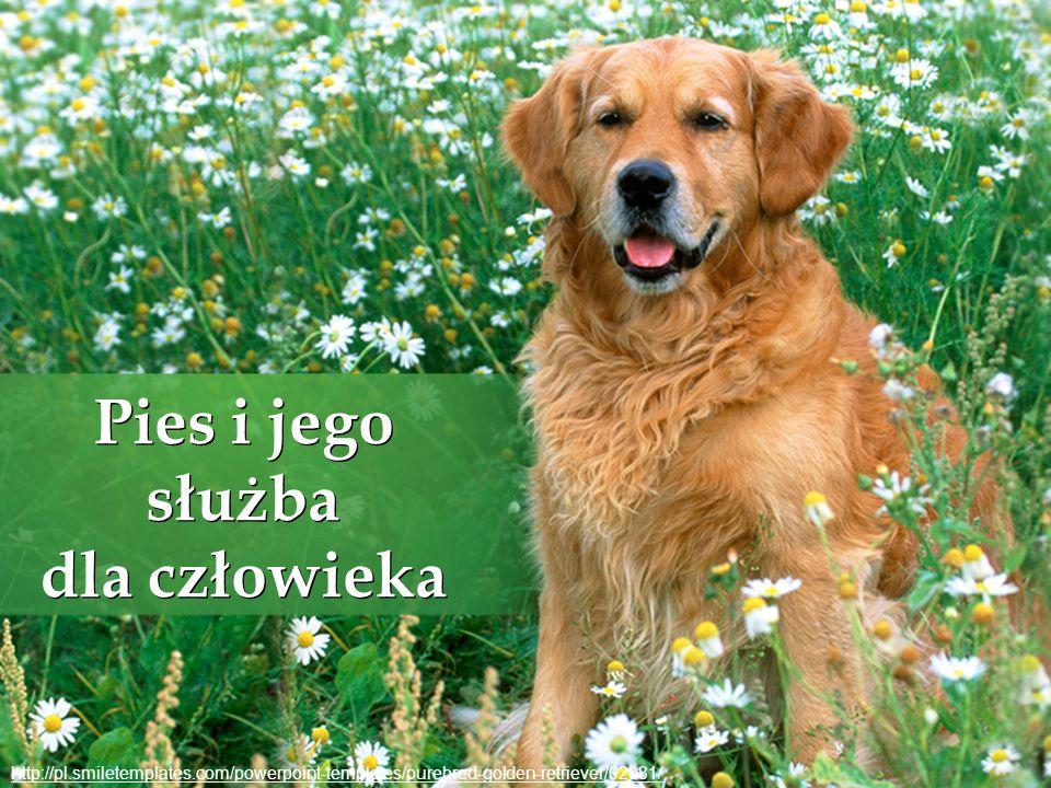 Pies i jego służba dla człowieka