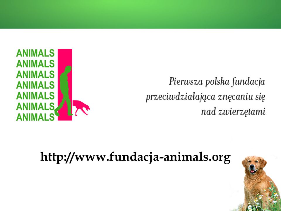 http://www.fundacja-animals.org