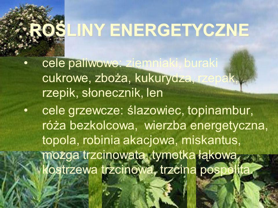 ROŚLINY ENERGETYCZNE cele paliwowe: ziemniaki, buraki cukrowe, zboża, kukurydza, rzepak, rzepik, słonecznik, len.