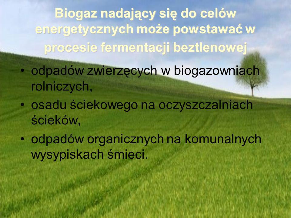 Biogaz nadający się do celów energetycznych może powstawać w procesie fermentacji beztlenowej