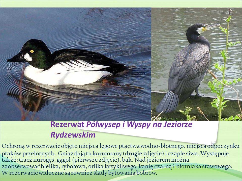 Rezerwat Półwysep i Wyspy na Jeziorze Rydzewskim