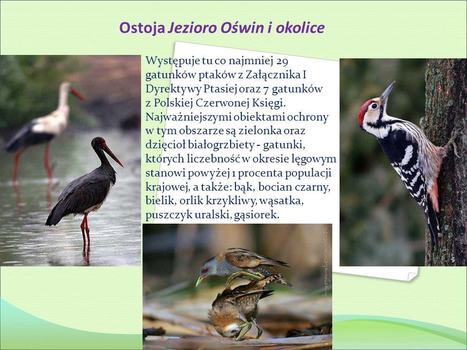 Ostoja Jezioro Oświn i okolice