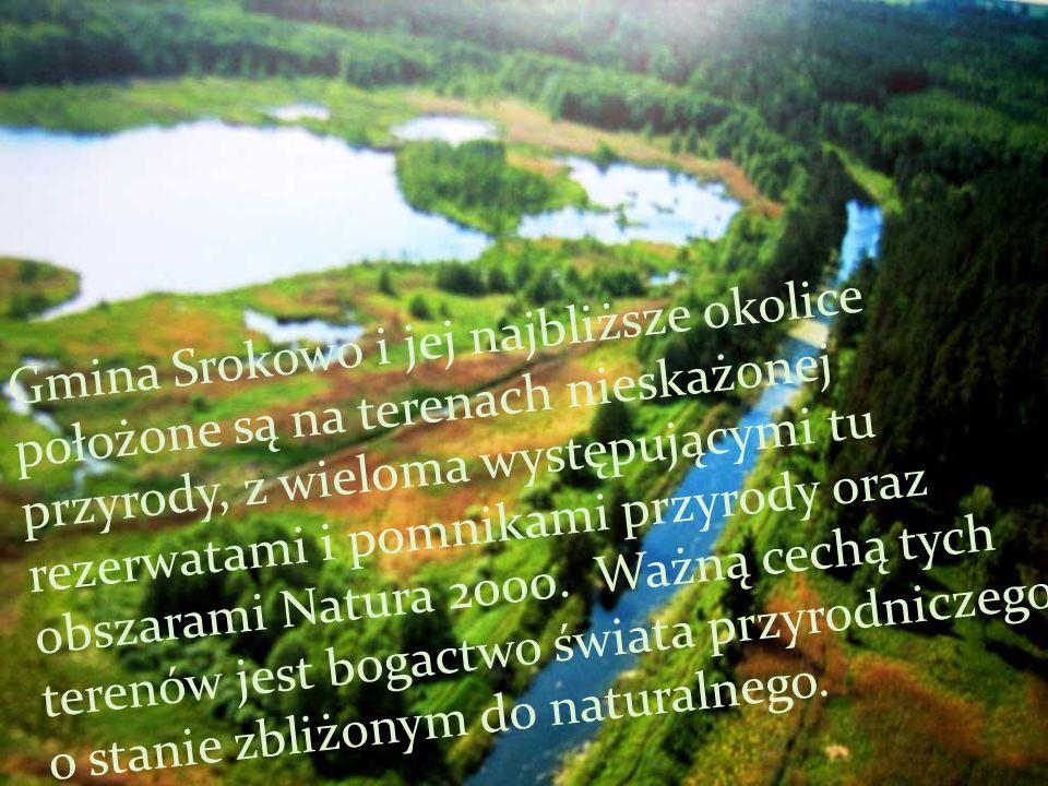 Gmina Srokowo i jej najbliższe okolice położone są na terenach nieskażonej przyrody, z wieloma występującymi tu rezerwatami i pomnikami przyrody oraz obszarami Natura 2000.