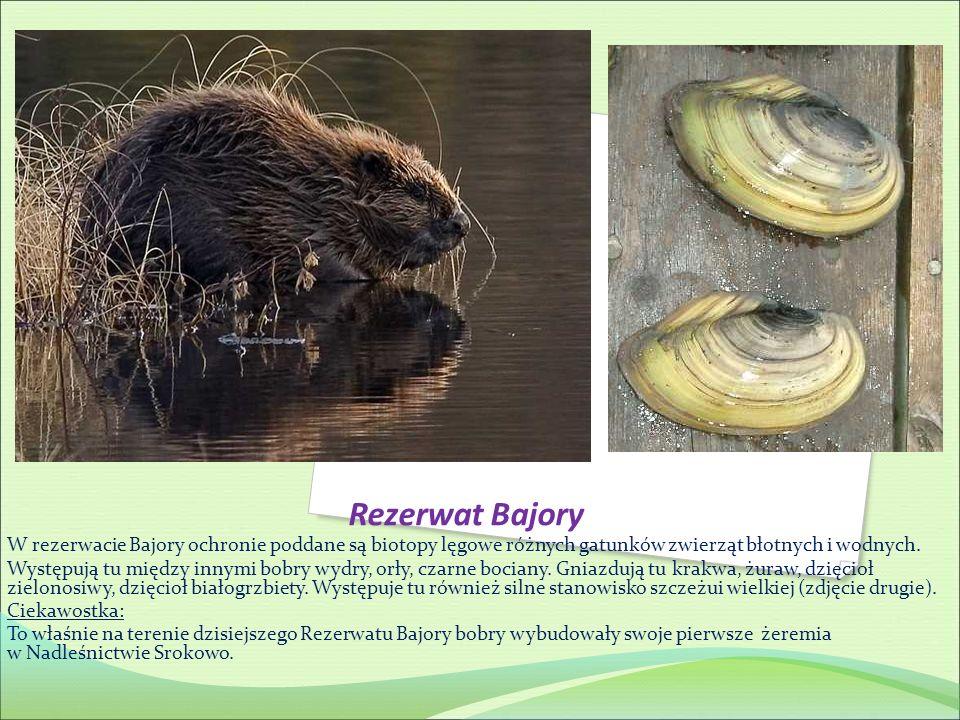 Rezerwat Bajory W rezerwacie Bajory ochronie poddane są biotopy lęgowe różnych gatunków zwierząt błotnych i wodnych.