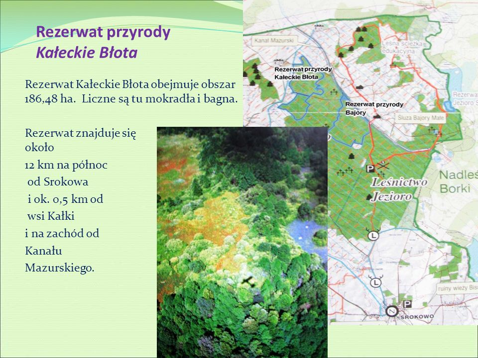 Rezerwat przyrody Kałeckie Błota