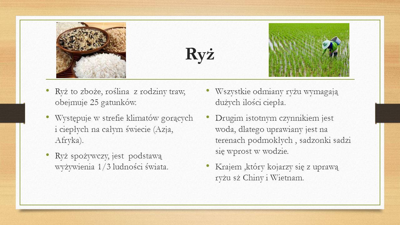 Ryż Ryż to zboże, roślina z rodziny traw, obejmuje 25 gatunków.