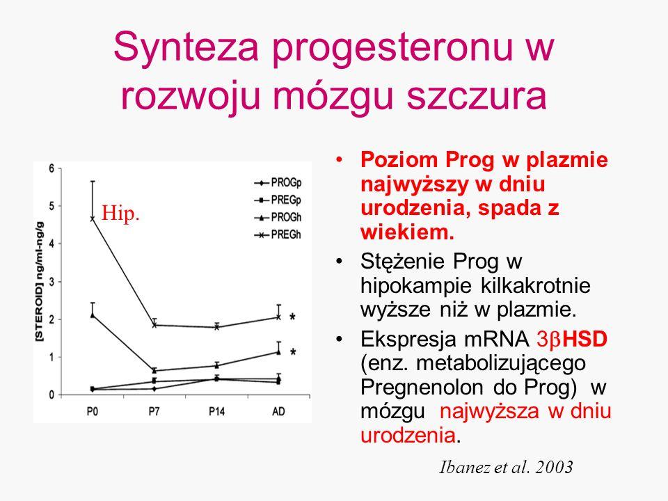 Synteza progesteronu w rozwoju mózgu szczura