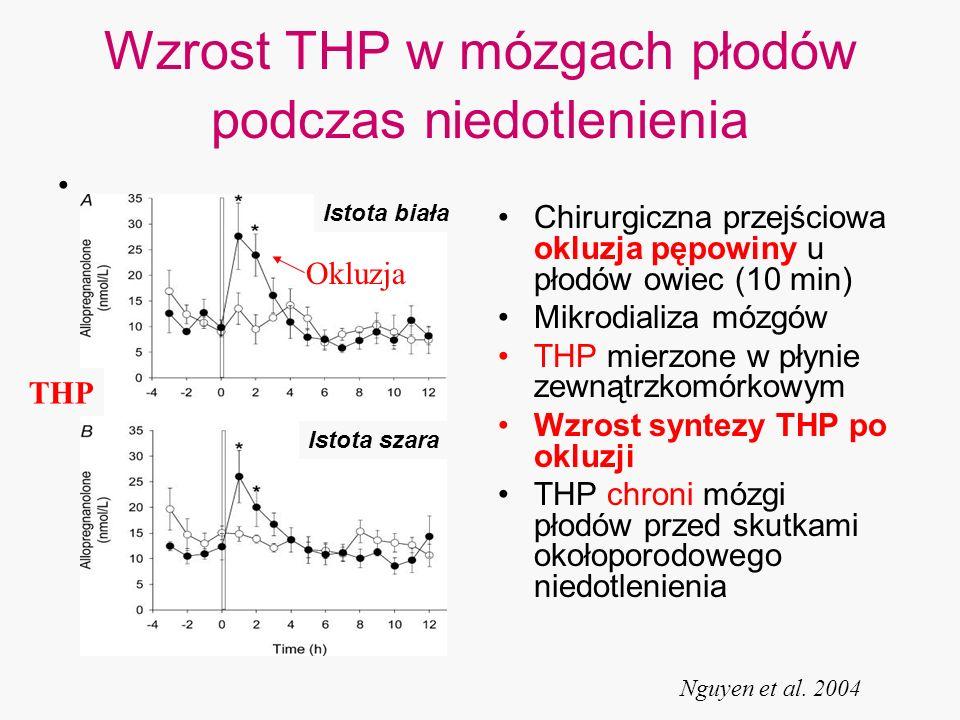 Wzrost THP w mózgach płodów podczas niedotlenienia