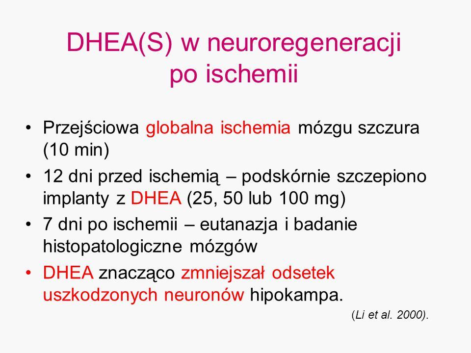 DHEA(S) w neuroregeneracji po ischemii