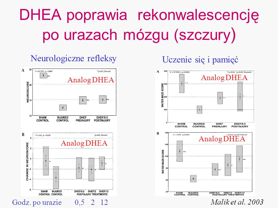 DHEA poprawia rekonwalescencję po urazach mózgu (szczury)