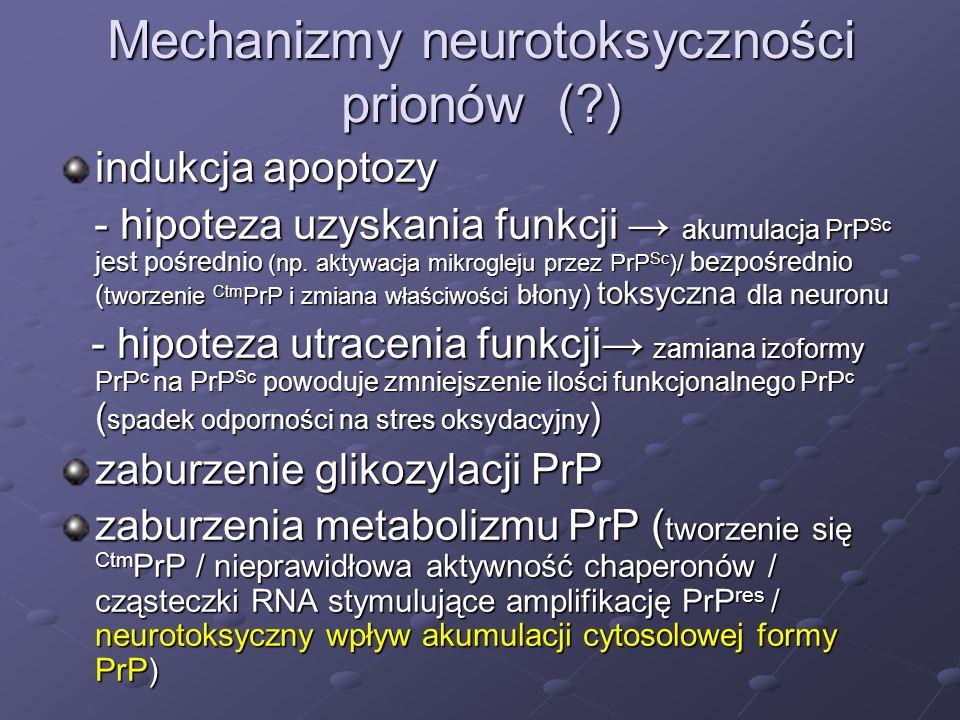 Mechanizmy neurotoksyczności prionów ( )