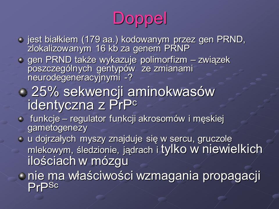 Doppel 25% sekwencji aminokwasów identyczna z PrPc