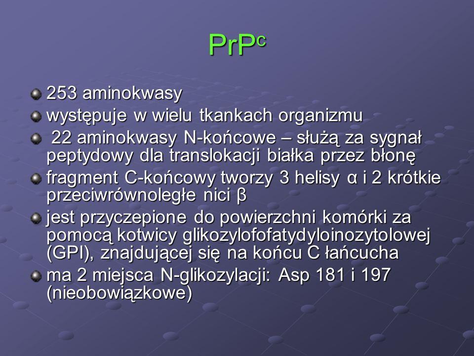 PrPc 253 aminokwasy występuje w wielu tkankach organizmu