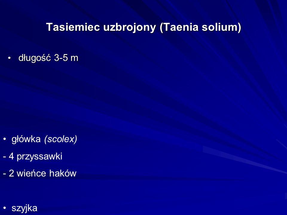 Tasiemiec uzbrojony (Taenia solium)