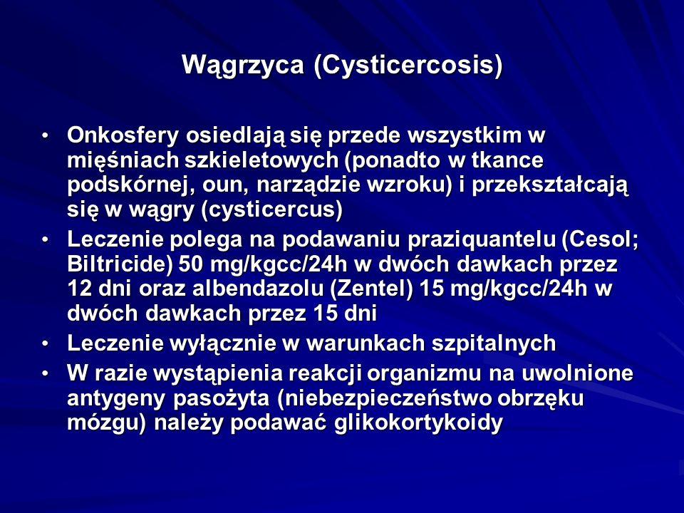Wągrzyca (Cysticercosis)