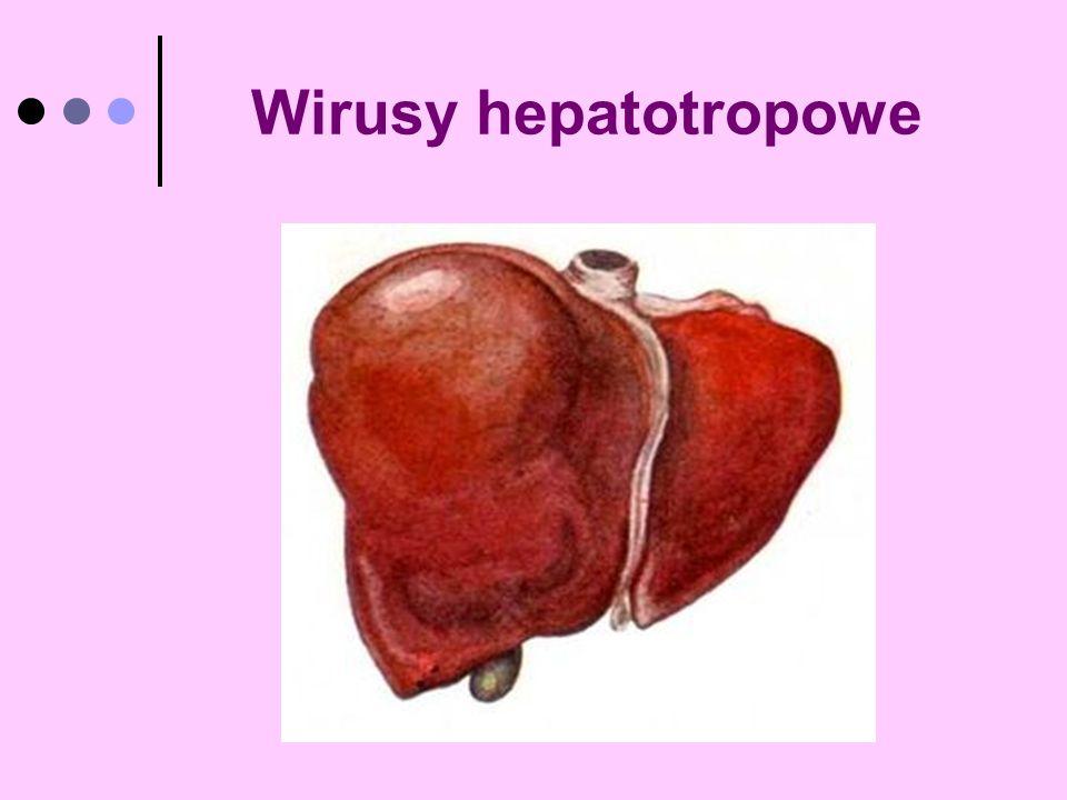 Wirusy hepatotropowe